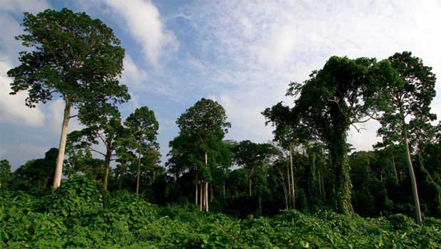Permasalahan Hutan Di Indonesia Atau Problems Forests In Indonesia