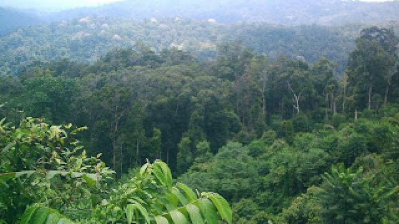 hutan-hujan-tropis-indonesia.jpg