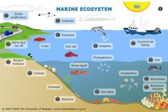 marine-ecosystem.jpg