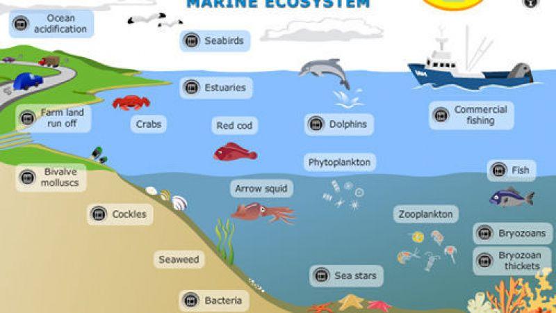 Ekosistem Laut Atau Marine Ecosystems Dr Arif Zulkifli Nasution