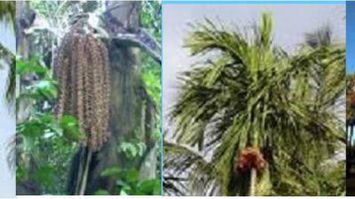 pohon-kelapa.jpg